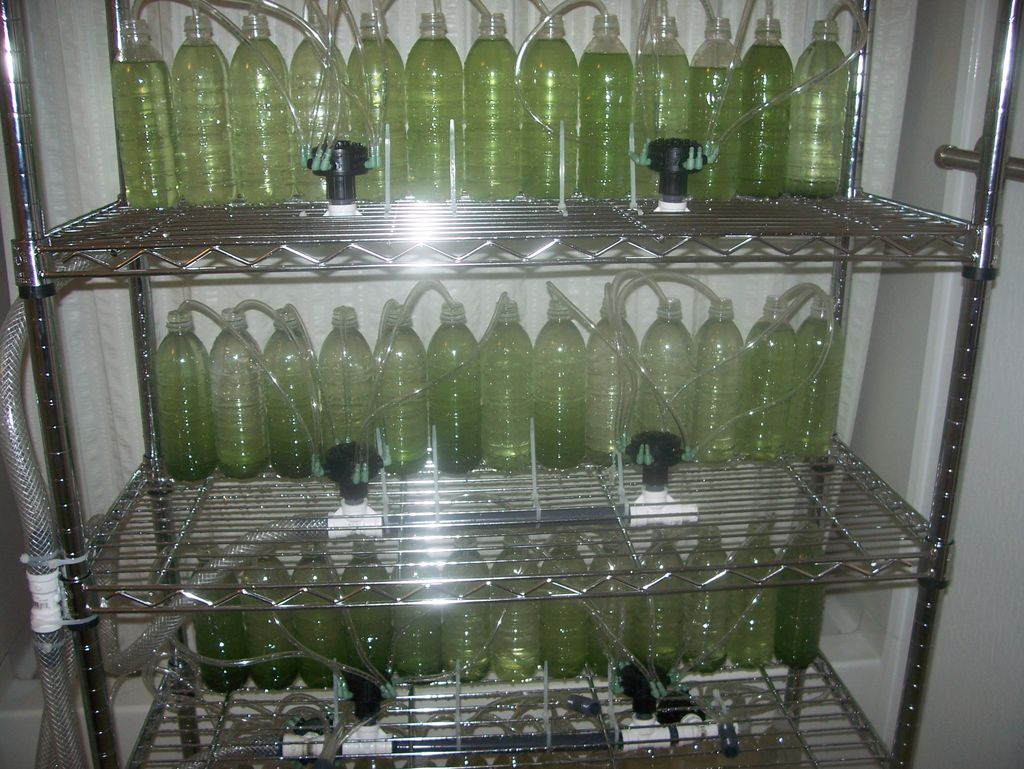 Creating An Algae Bioreactor From Recycled Water Bottles