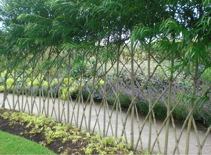 Living Fences How To Make A Living Fence For Your Garden