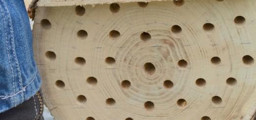 mason-bee-nest