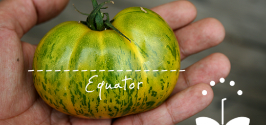 save-tomatoe-seeds