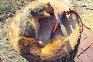 squirrel-and-knife