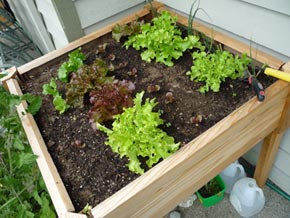 6 Tips For Building Soil For Your Raised Garden Beds Planters Eco Sni