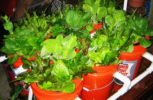 5 Gallon Bucket Aquaponics System Eco Snippets