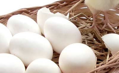 Raising-Chickens-from-Eggs-