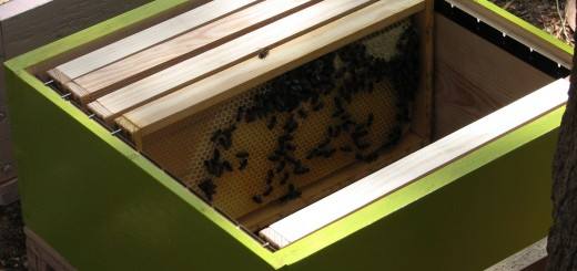 Inside_the_Beehive_2