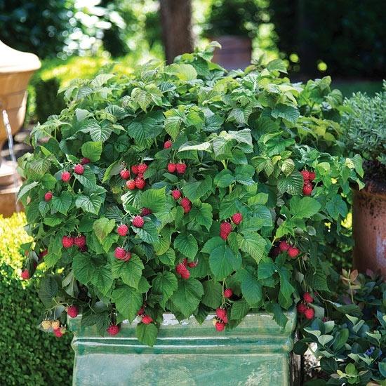 Diy edible landscaping : Edible landscape