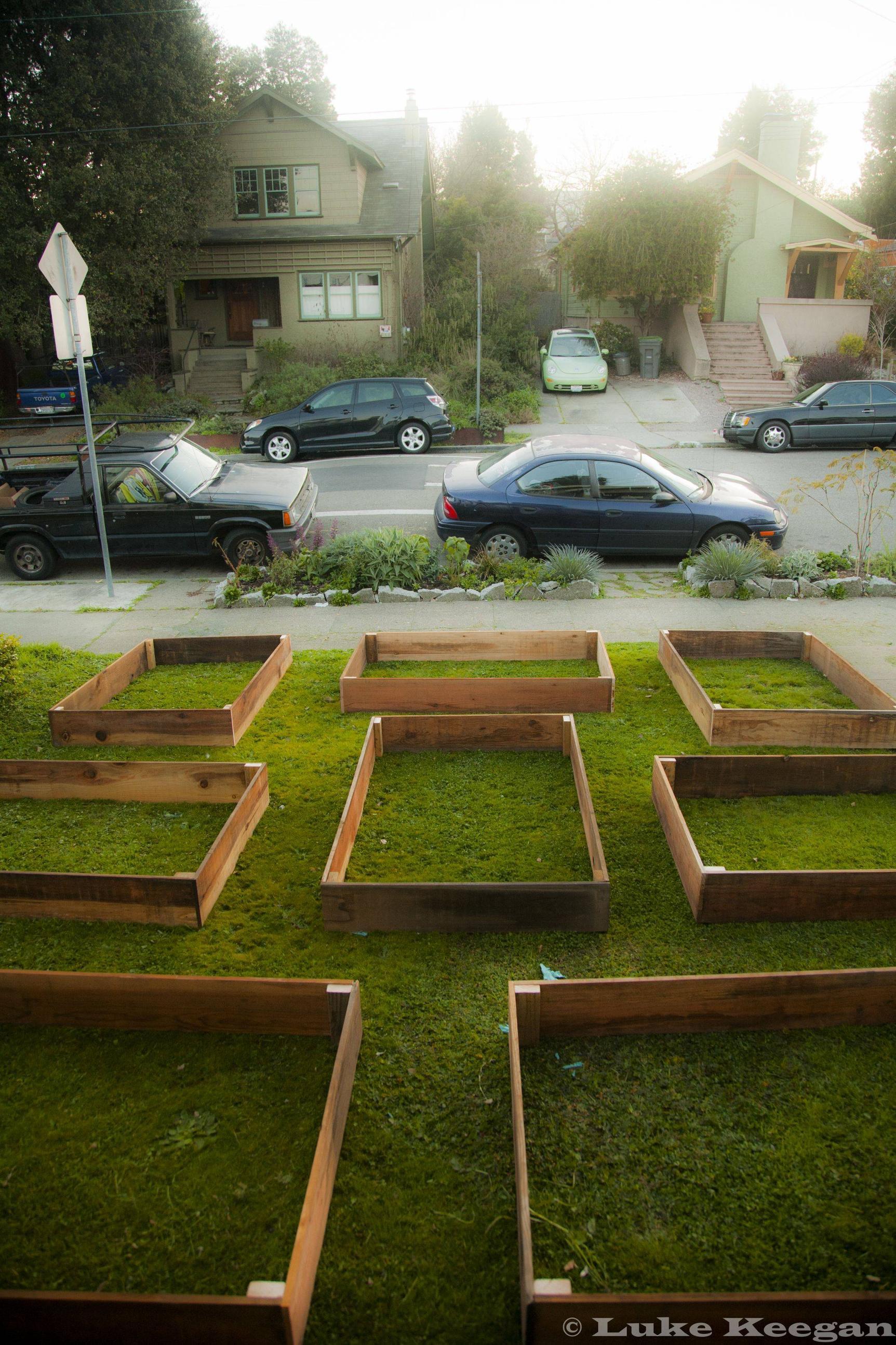 Edible Lawn 2