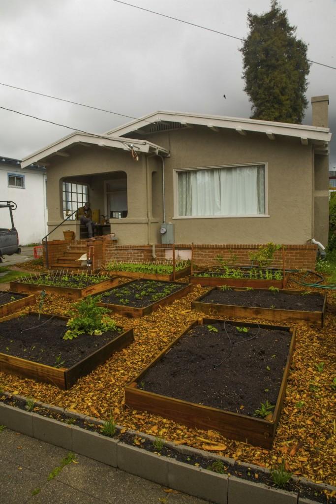 Edible Lawn 5
