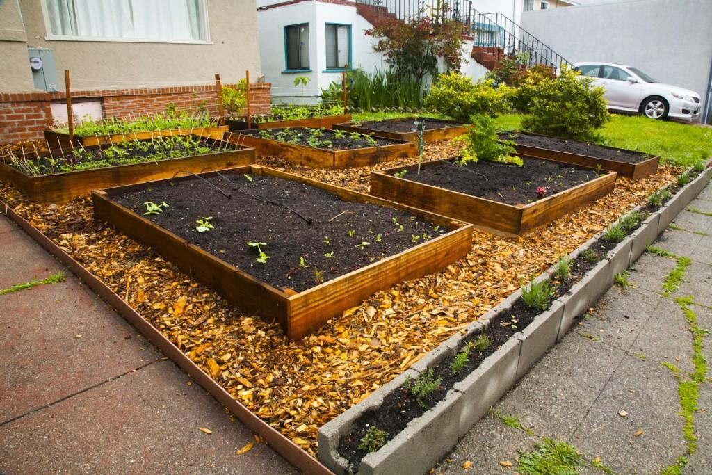 Edible Lawn 7