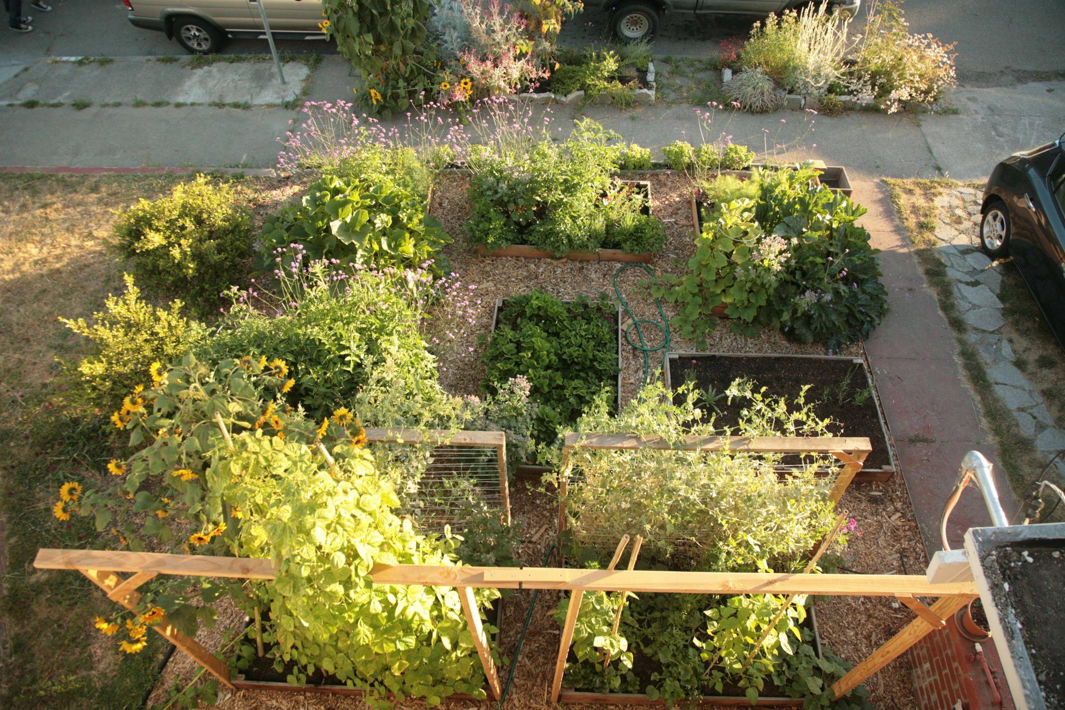 Edible Lawn 9