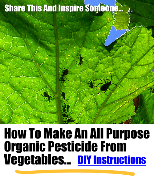 How To Make An All Purpose Organic Pesticide From Vegetables...