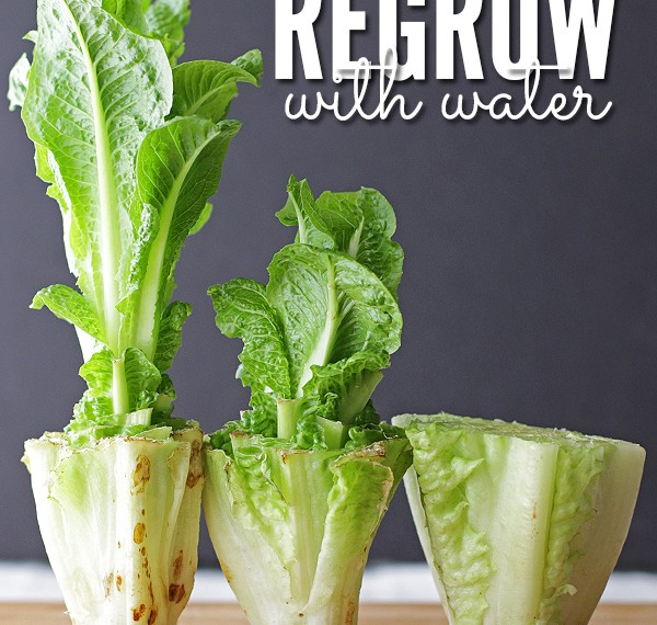 10 Foods That You Can Regrow From Scraps Using Nothing But Water…