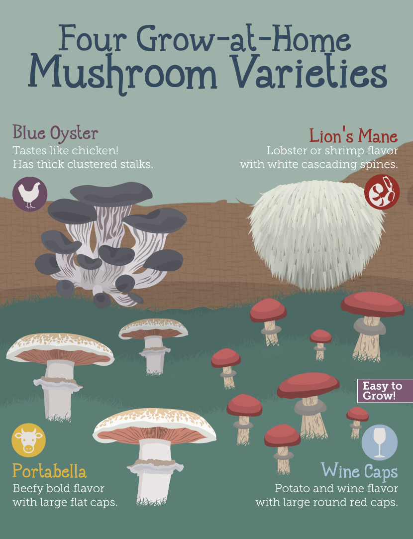 How To Grow Your Own Fresh Mushrooms At Home… – Eco Snippets