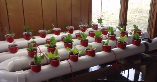 How To Build A Gravity-Based PVC Aquaponic Growing System...