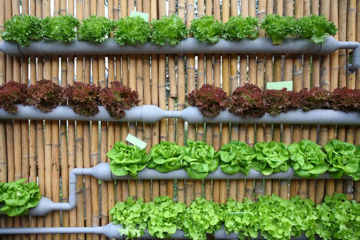 Vertical Wall Garden Ideas amazing vertical salad garden ideas an edible wall of greens Amazing Vertical Salad Garden Ideas An Edible Wall Of Greens