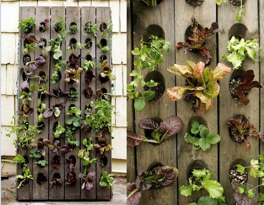 Wall Garden Ideas pallets are humble structures but they sure make splendid ideas in the garden come to life Amazing Vertical Salad Garden Ideas An Edible Wall Of Greens