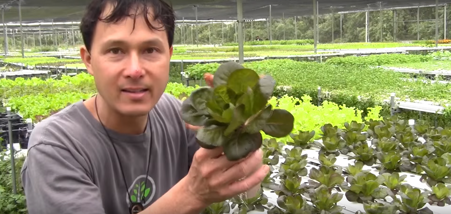 Hydroponic Farm Grows 350 Varieties Of Vegetables With 90 Minerals To Grow The Best Tasting Food...