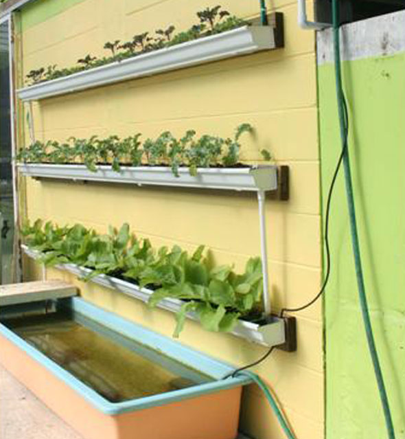 How To Set Up An Aquaponic Gutter Garden...