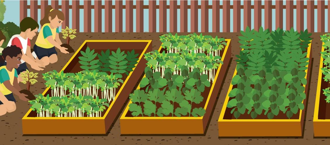 Getting Schooled In The Garden – How To Start A School Garden...
