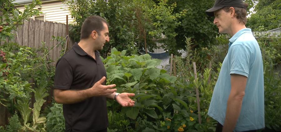 Companion Planting In A Small Productive Urban Garden...
