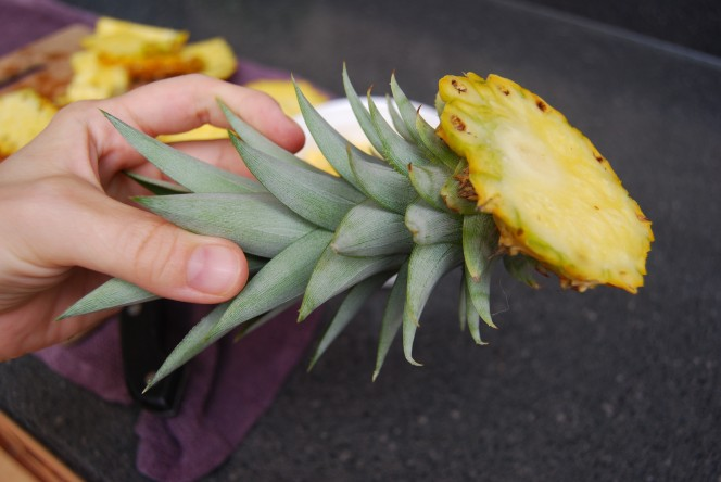 How To Easily Grow Your Own Pineapples At Home…