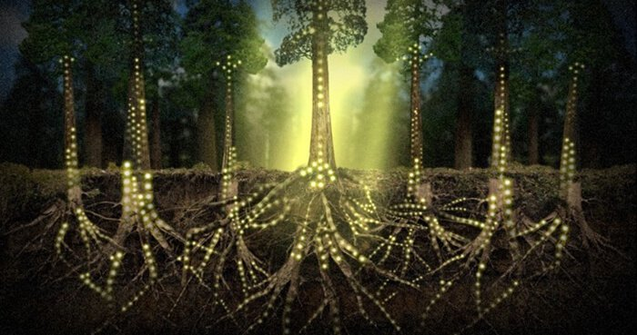 Scientists Find That Plants Can Communicate Telepathically ...