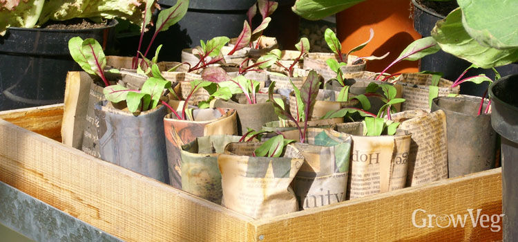 Recycling Ideas For The Garden To Save Money & Be More Eco Friendly...