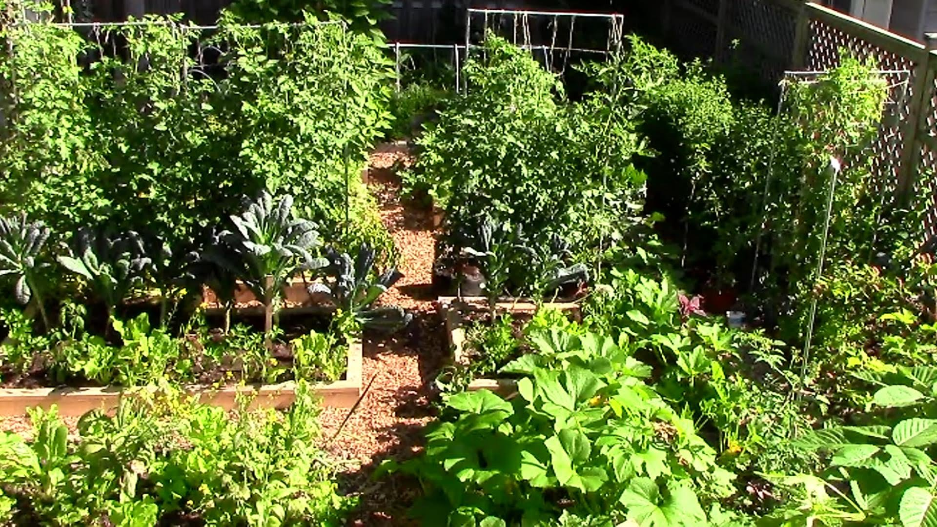9 Easy Tips To Grow A Lot Of Food In A Small Garden Eco