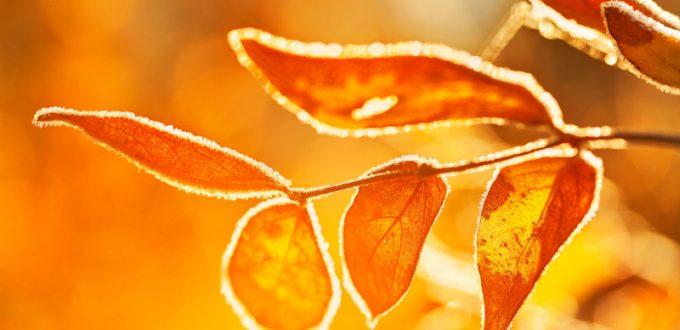 Bionic Leaf Turns Sunlight Into Free Liquid Fuel 10x Faster Than Plants...