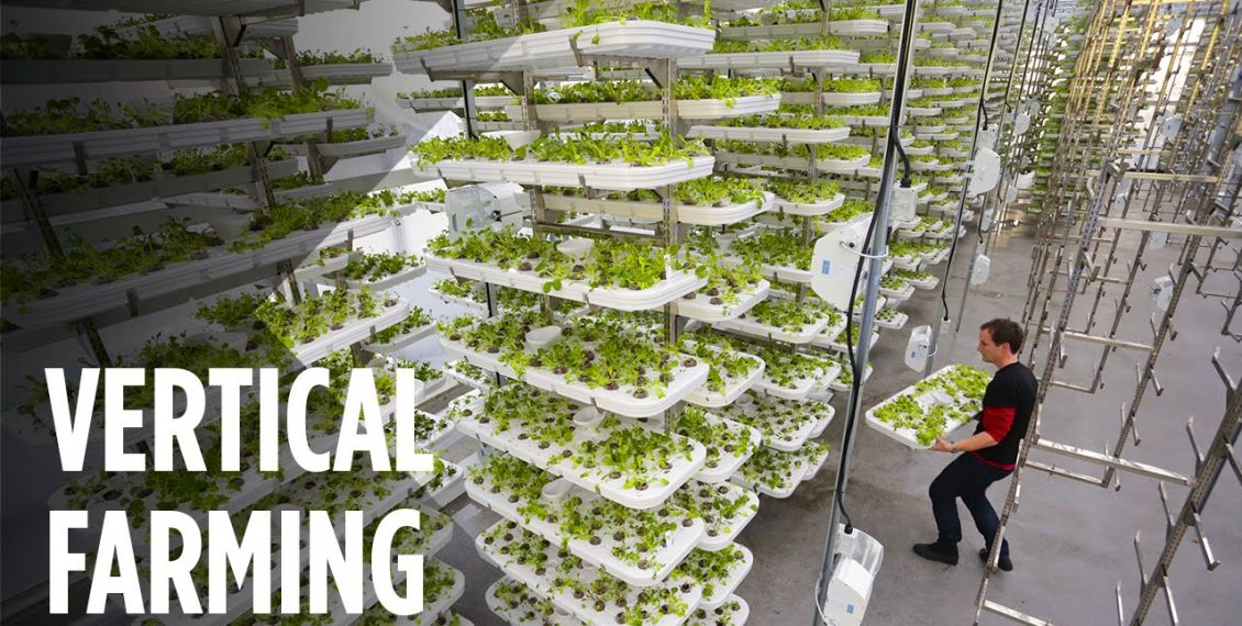 This Farm Of The Future Uses No Soil And 95% Less Water...