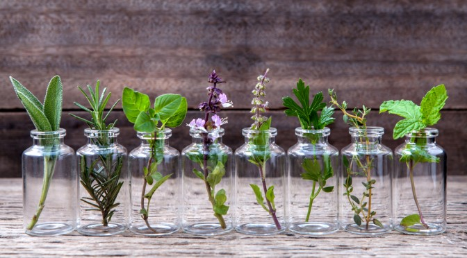 These 9 Plants Naturally Help To Keep Mosquitoes Away...