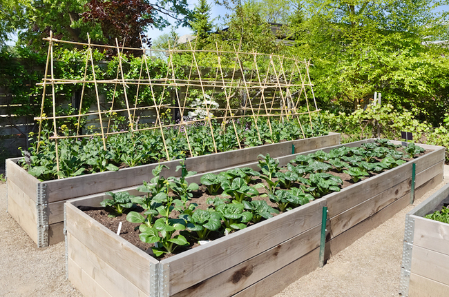 Small yard big yield growing vegetables in a limited for Limited space gardening ideas