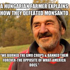 Hungarians Just Destroyed All Monsanto GMO Corn Fields...
