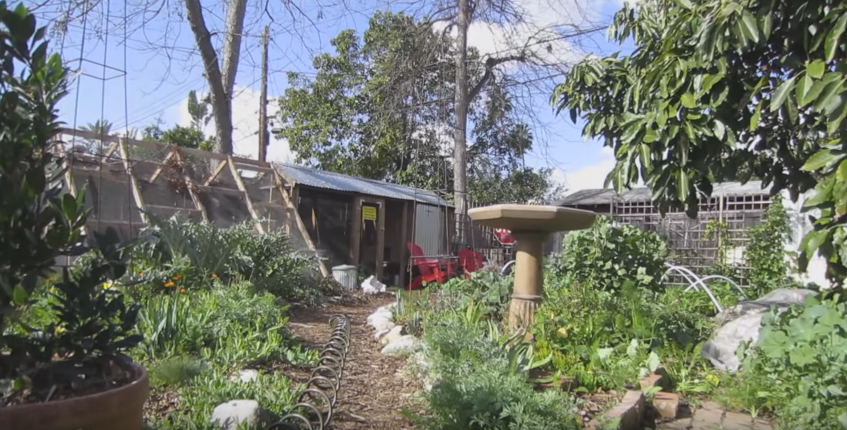 This Sustainable Couple Squeezed An Entire Farm Onto Their Small Los Angeles Lot...