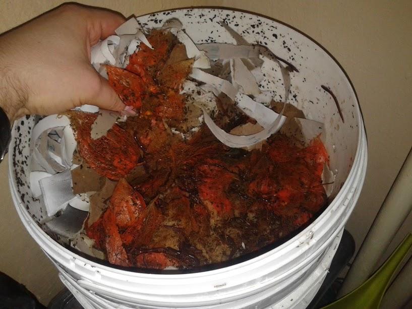 semi-aquatic-composting-system-11