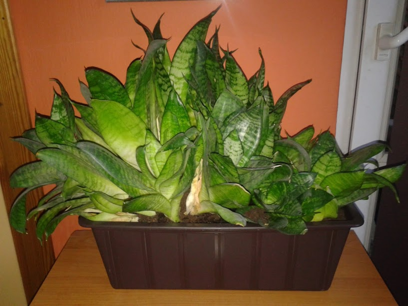 Semi-Aquatic Composting System – Plants Grow Like Crazy With No Fertilizer Required...
