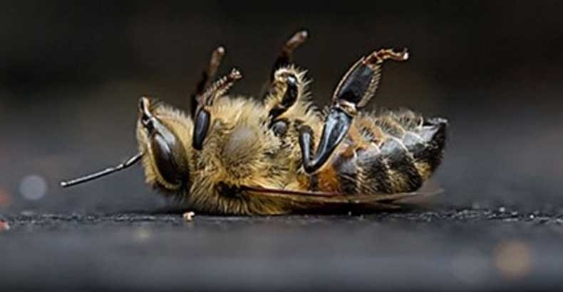 First Long-Term Study Confirms World's Most Popular Pesticides Are Wiping Bees Off The Planet...