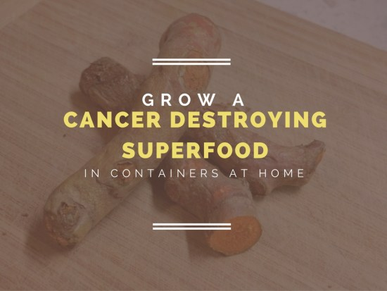 Grow A Cancer-Destroying Super Food At Home: Container Gardens Of Turmeric...