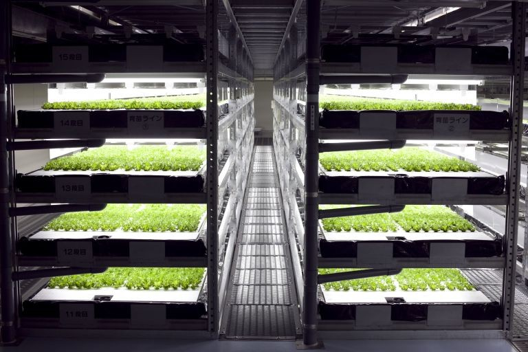 The First Ever Robot-Run Farm Will Harvest 30,000 Heads Of Lettuce Per Day...