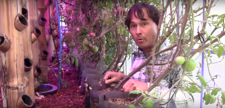 Vertical Aquaponics System Uses Bamboo Towers In Greenhouse To Increase Production 10x...