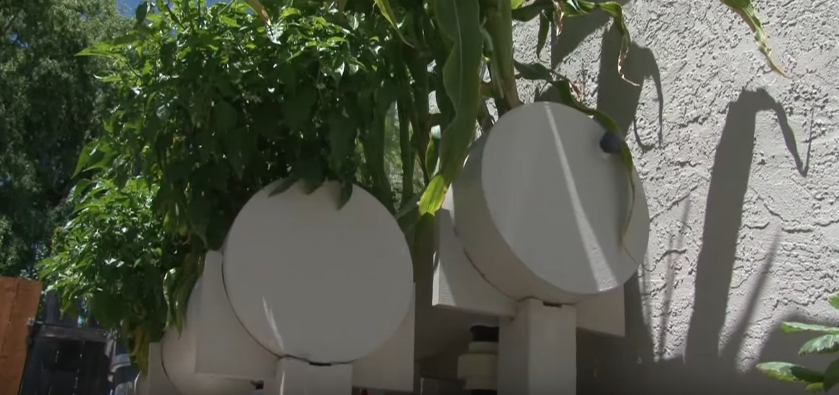 Backyard Aquaponics Mini Farm Connected To The Internet...