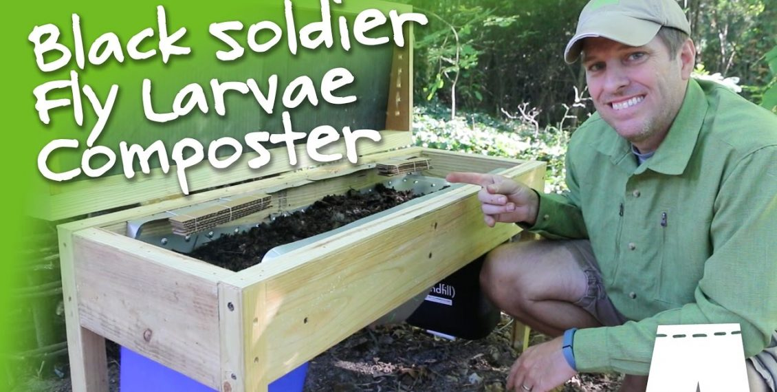 How To Make & Operate A DIY Soldier Fly Larvae Composting Bin...