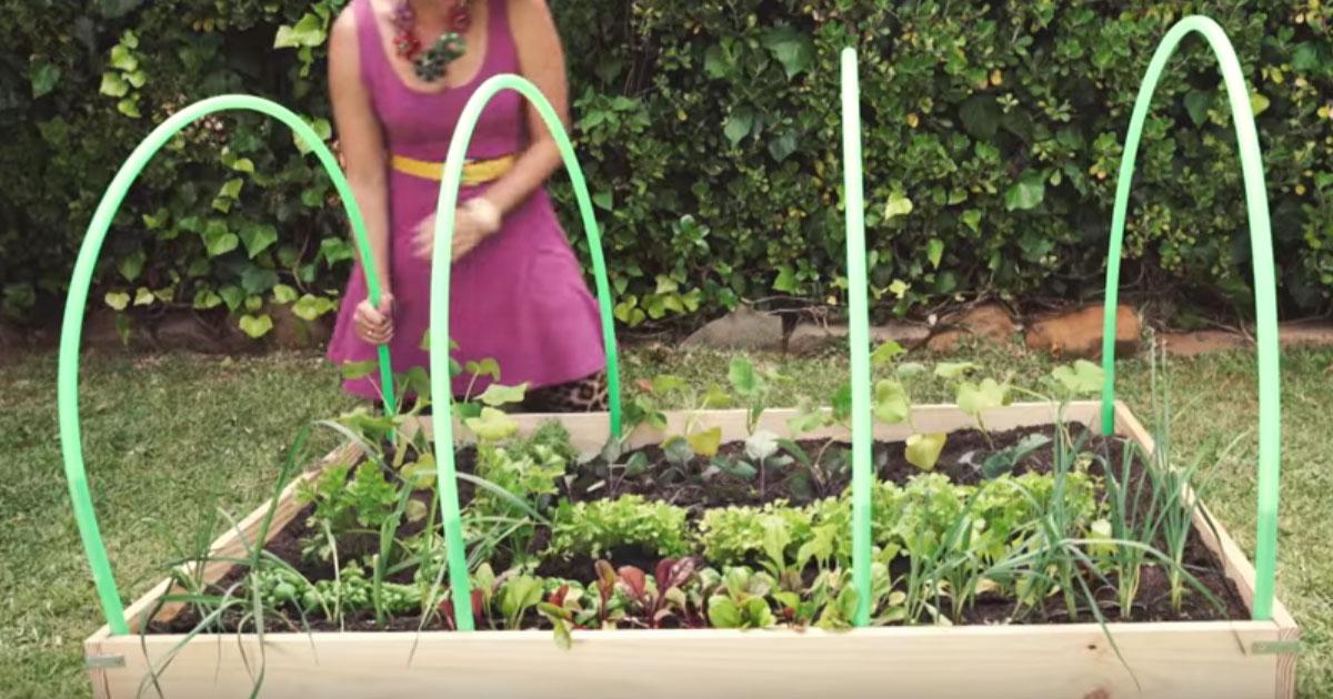 Making A Mini Greenhouse Out Of 4 Hula-Hoops...