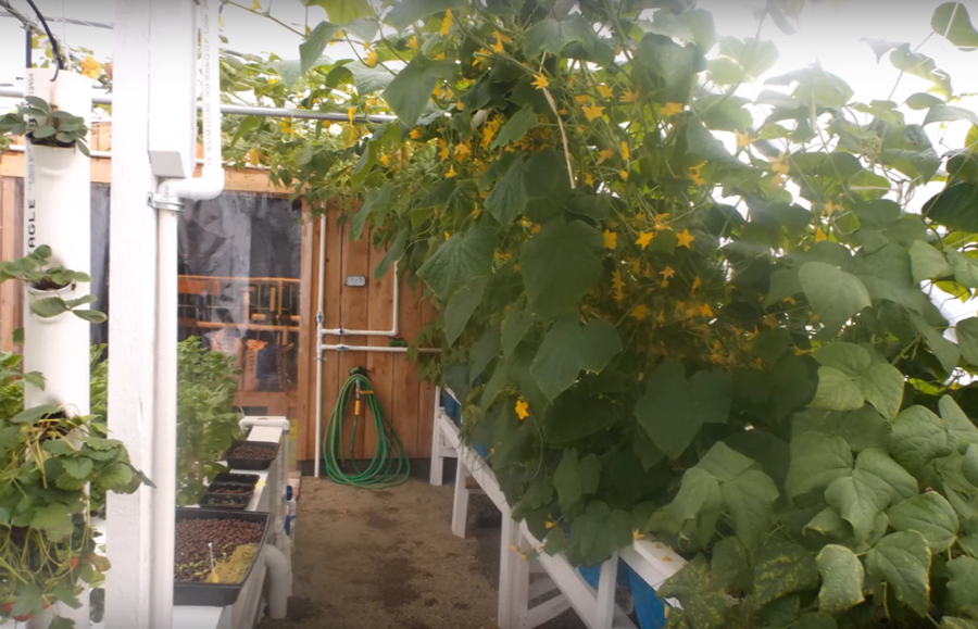 An Awesome Aquaponics Greenhouse Build From Start To Finish...