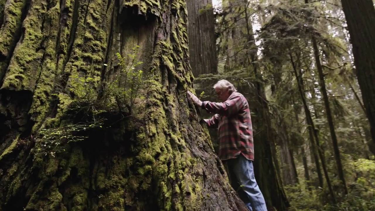 Man Inspired By A Near-Death Experience Is On A Personal Quest To Reforest Our Planet…