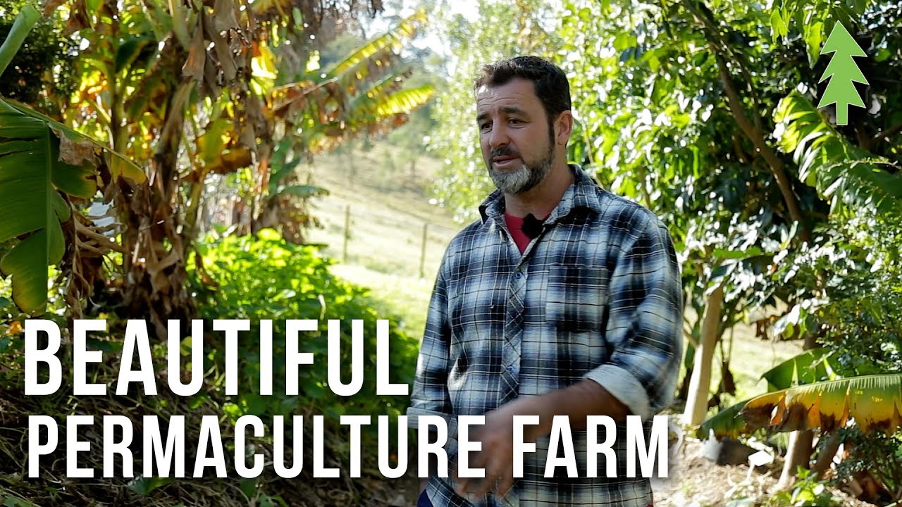 A Beautiful 1-Acre Small Scale Permaculture Farm That Feeds 50 Families…