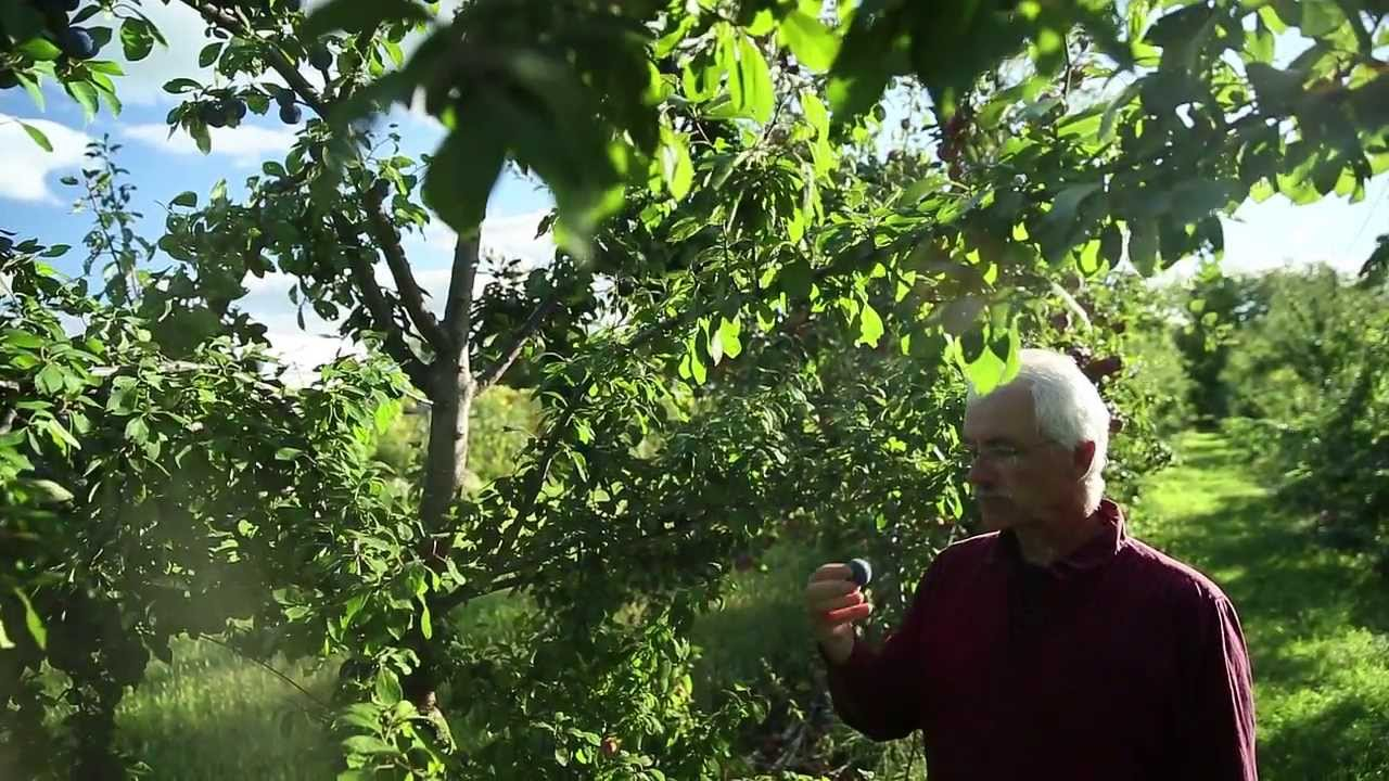 Miracle Farms, A 5-acre Commercial Permaculture Orchard In Southern Quebec, Canada…
