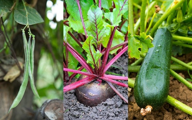 9 Of The Fastest Growing Veggies You Can Harvest In No Time...