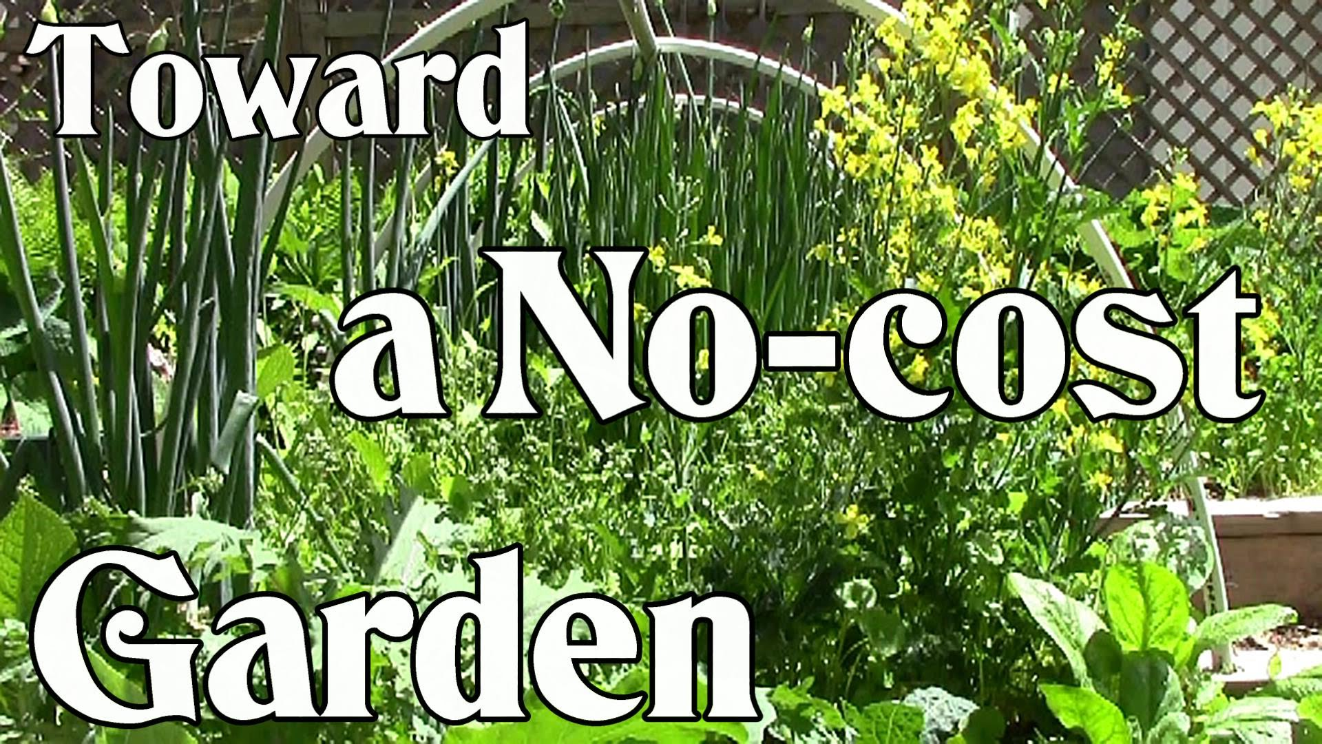 Toward A No-Cost Garden: Grow Your Own Food For Next To Nothing
