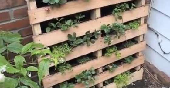 How To Make A Vertical Pallet Garden…
